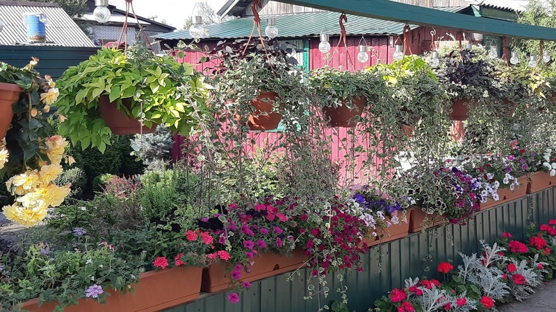 Мой цветущий двор!🌱Красота своими руками!🦋🌺 My garden! Beauty with your hands!