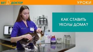 Как правильно сделать укол кошке или коту в бедро или холку. Подкожная инъекция в домашних условиях